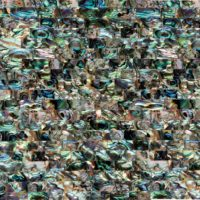green_abalone-Onyx-1024x1024-200x200